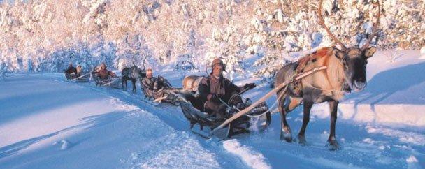 Séminaire incentive en Laponie